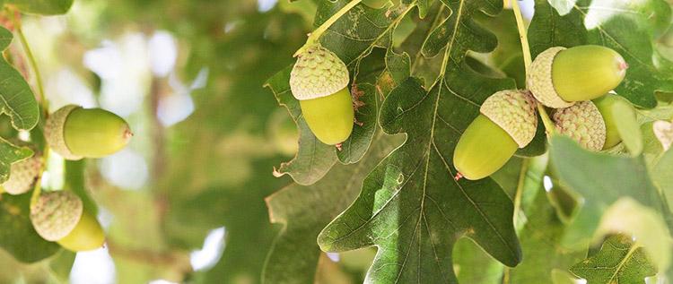 arbre fruitier concours energetique